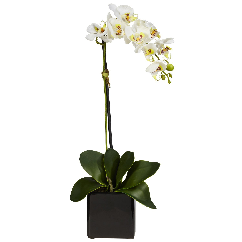 Cascading White Orchid Micro Plant Studio