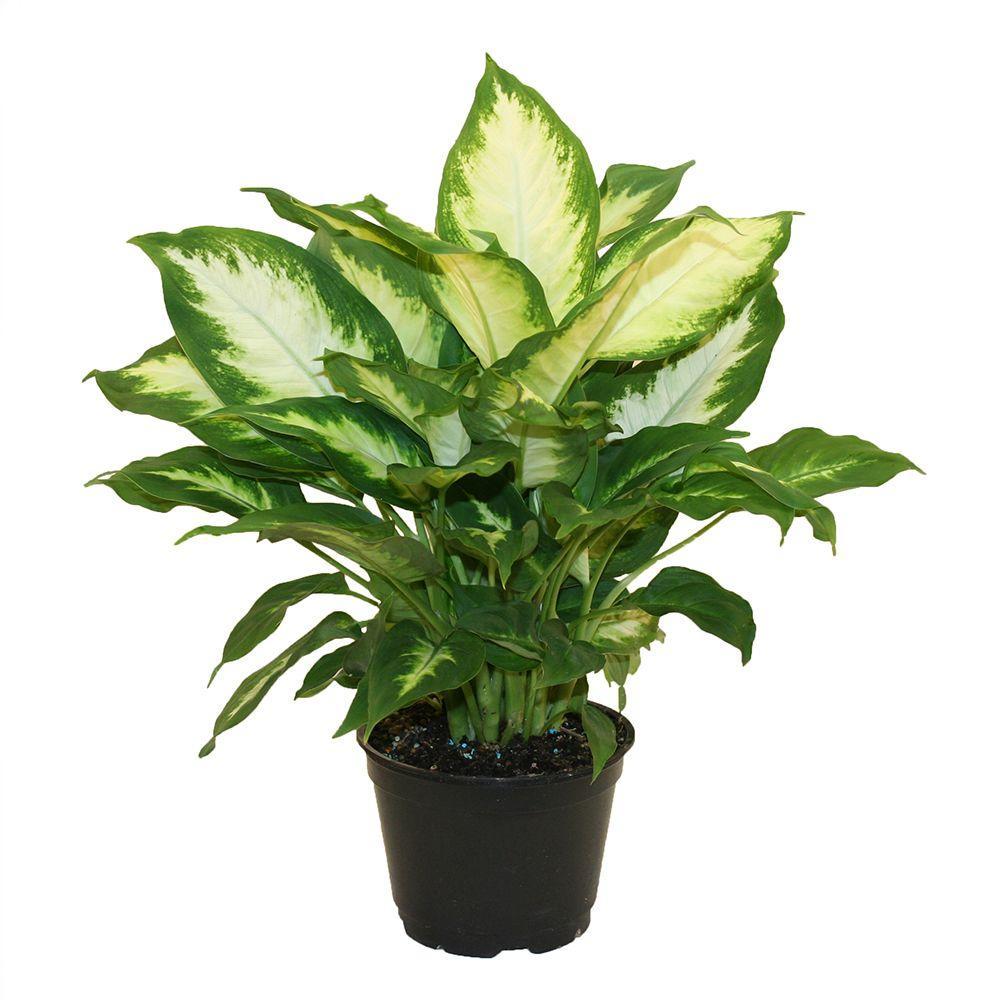 House Plants Micro Plant Studio